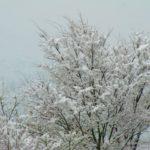 日本列島に過去最強クラスの寒波襲来/物流混乱・停電リスクも